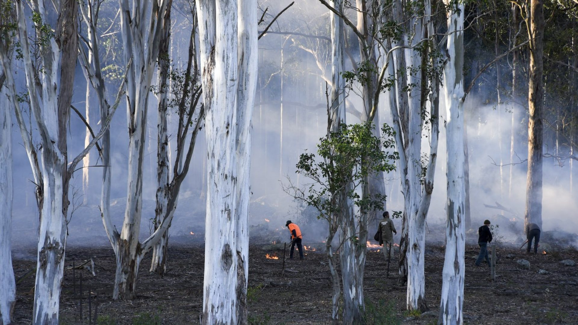 Cultural burning. Group of people in a smokey forest