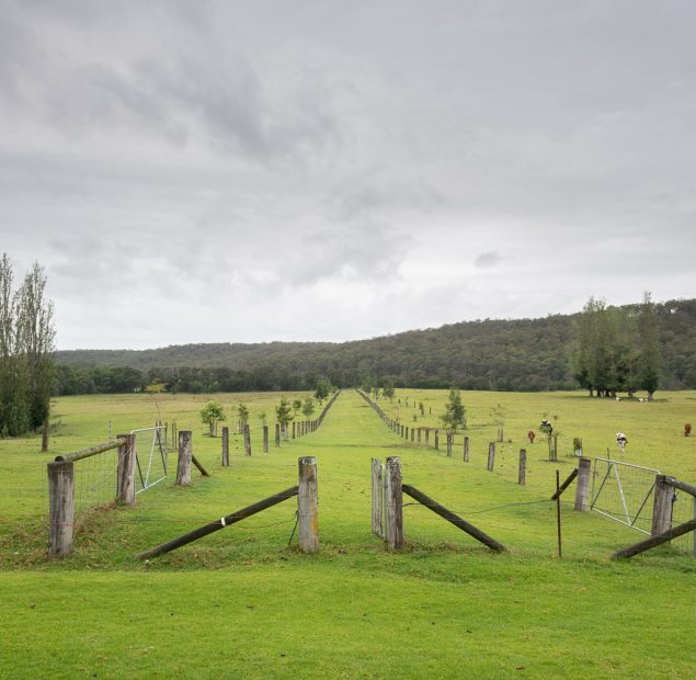 A fence line stretches into a grassed landscape. Mountains in the backgroun