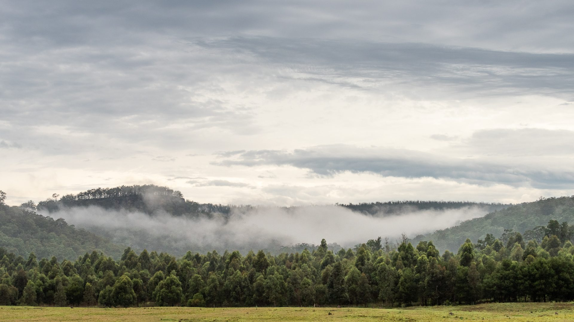 A forest of trees with a mountain range behind and low clouds above the trees